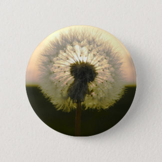 dandelion in the sun 2 inch round button