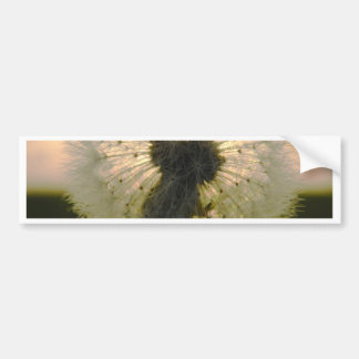 dandelion in the sun bumper sticker