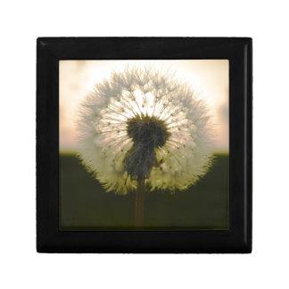 dandelion in the sun gift box