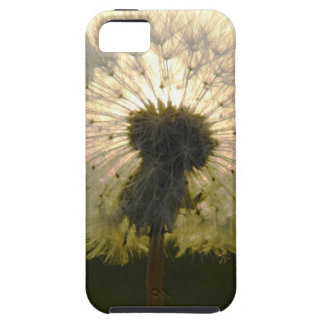 dandelion in the sun iPhone 5 covers