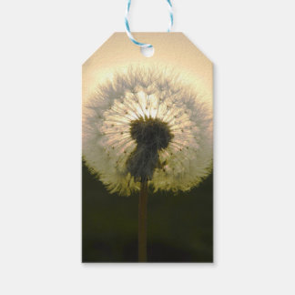dandelion in the sun pack of gift tags