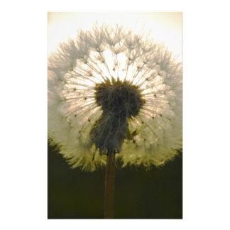 dandelion in the sun stationery