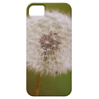 Dandelion iPhone 5 Cover