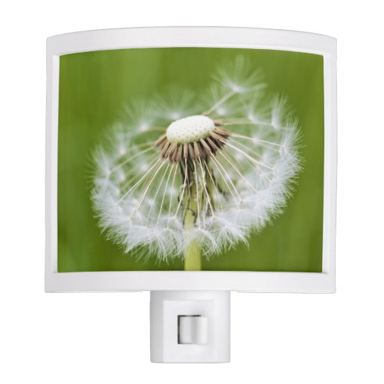 Dandelion Nite Light