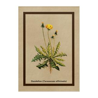 Dandelion On Old Paper Acrylic Print