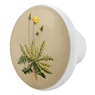 Dandelion On Old Paper Ceramic Knob