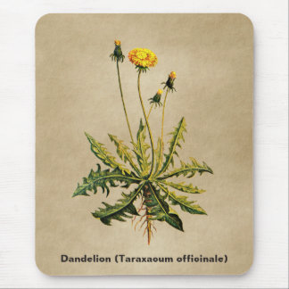 Dandelion On Old Paper Mouse Pad