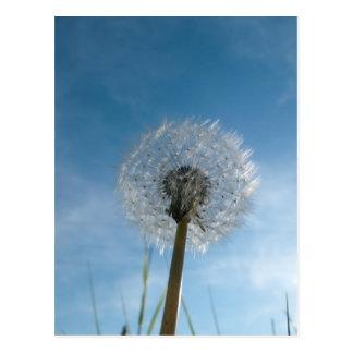 Dandelion Seed Head Post Card