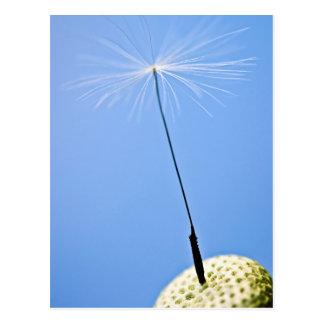 Dandelion Seed Postcard