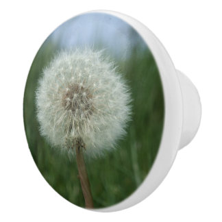 Dandelion Seedhead Dresser Knob