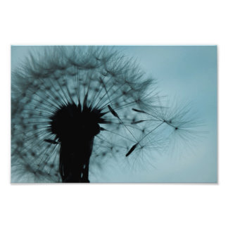 Dandelion Seeds Teal and Black Photographic Print
