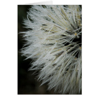 Dandelion with Dew Note Card