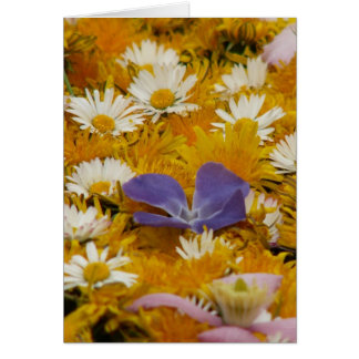 dandelions etc card