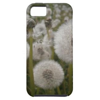 Dandelions iPhone 5 Cases