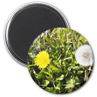 Dandelions On The Meadow Magnet