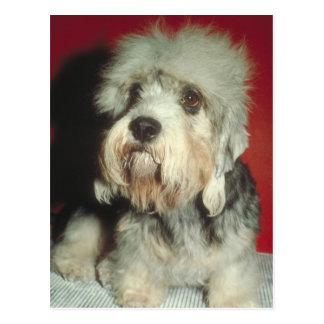 Dandie Dinmont Terrier Postcard