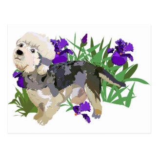 Dandy Dinmont among the Iris Postcard