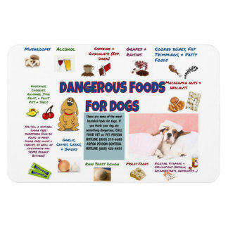Dangerous Foods for Dogs Refrigerator Magnet