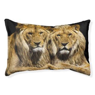 Dangerous Predator Lions Pet Bed