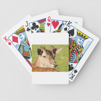 Daniel young smart wild animal bicycle playing cards