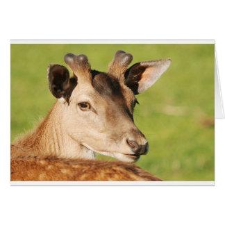Daniel young smart wild animal card