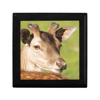 Daniel young smart wild animal gift box