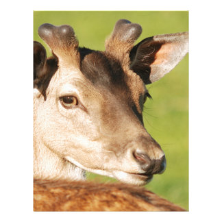 Daniel young smart wild animal letterhead