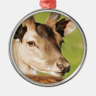 Daniel young smart wild animal metal ornament