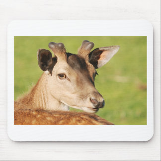 Daniel young smart wild animal mouse pad