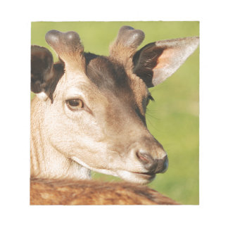 Daniel young smart wild animal notepad