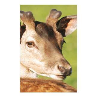 Daniel young smart wild animal stationery