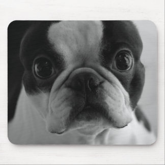 Danson Boston Terriers Mouse Pad