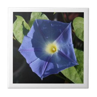 Dark Blue Morning Glory Tiles
