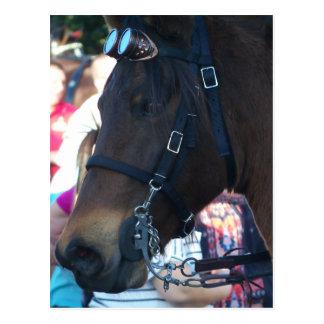 Dark Brown Arabian Horse wearing goggles Postcard