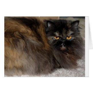 Dark Brown Persian Cat Greeting Cards
