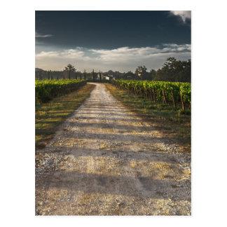 Dark Country Road Postcard