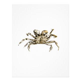 Dark Crab Photo Letterhead