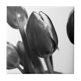 Dark Elegance OF Tulips Tile