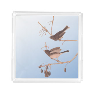 Dark-Eyed Junco Audubon Snow Birds on Bare Branch Acrylic Tray