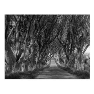 Dark Hedges in Black and White Postcard