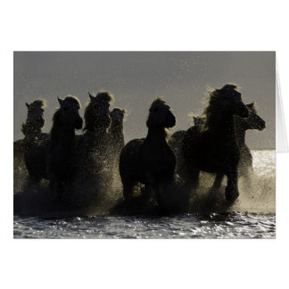 Dark Horses III Horse Greeting Card