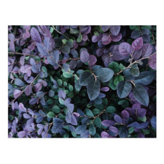 Dark Leaves Paper Products Postcard