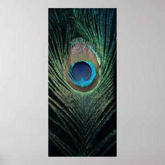 Dark Peacock Feather Still Life Poster
