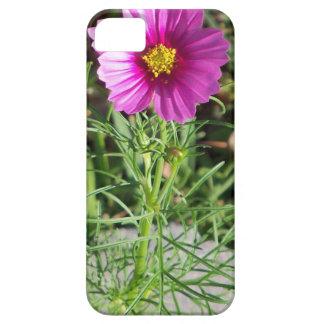 Dark pink Cosmos daisy flower iPhone 5 Case