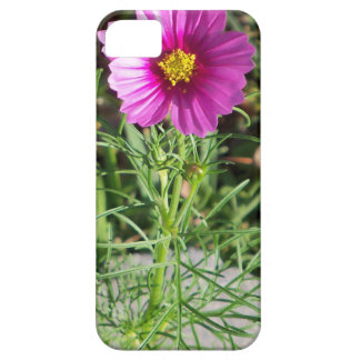 Dark pink Cosmos daisy flower iPhone 5 Cover