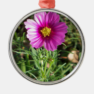 Dark pink Cosmos daisy flower Metal Ornament