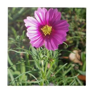 Dark pink Cosmos daisy flower Tile