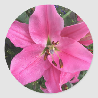 Dark Pink Lily with Raindrops Stickers