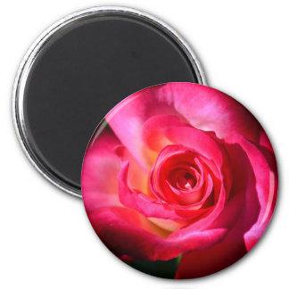 Dark Pink Rose Magnet