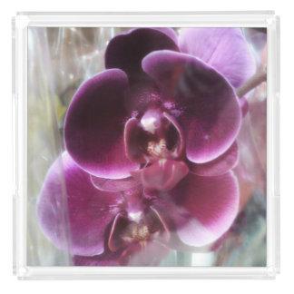 Dark Purple Moth Orchids Acrylic Tray